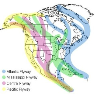 Major Avian Migration Flyways in North America