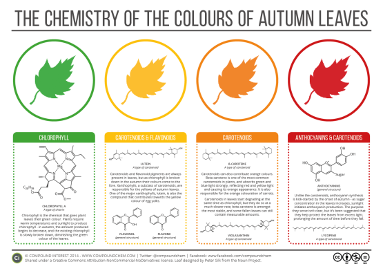 chemistry-of-leave-colors