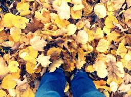 You just can't beat the sound of leaves crunching under your feet.
