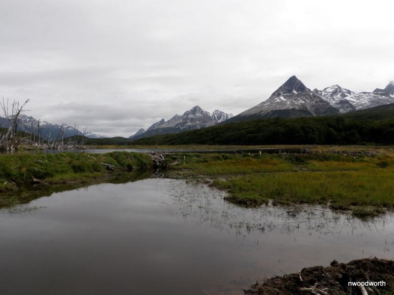 Beaver dams, ponds, & lodges dot the scene of Tierra del Fuego
