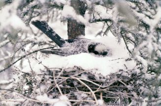 grayjayon-nest-dan-strickland