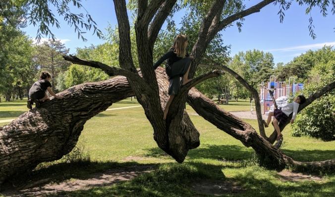 Three children climb on a tree