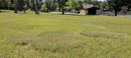Fairy circles are all over the park.