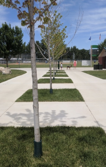 These newly added trees will bring shade for years to come.