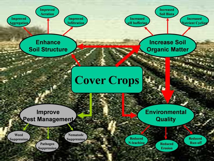 covercropsdiagram