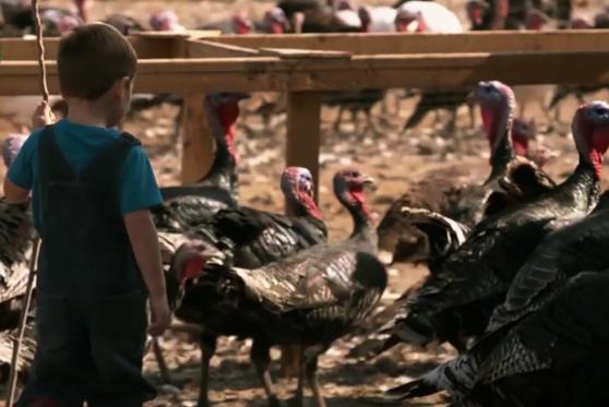 turkeykid