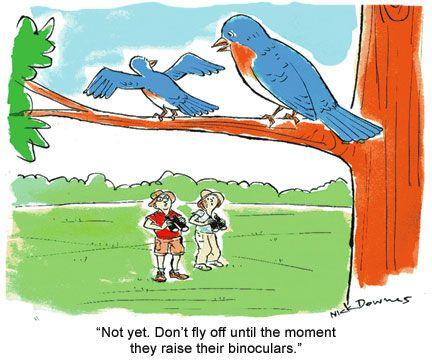 birding cartoon